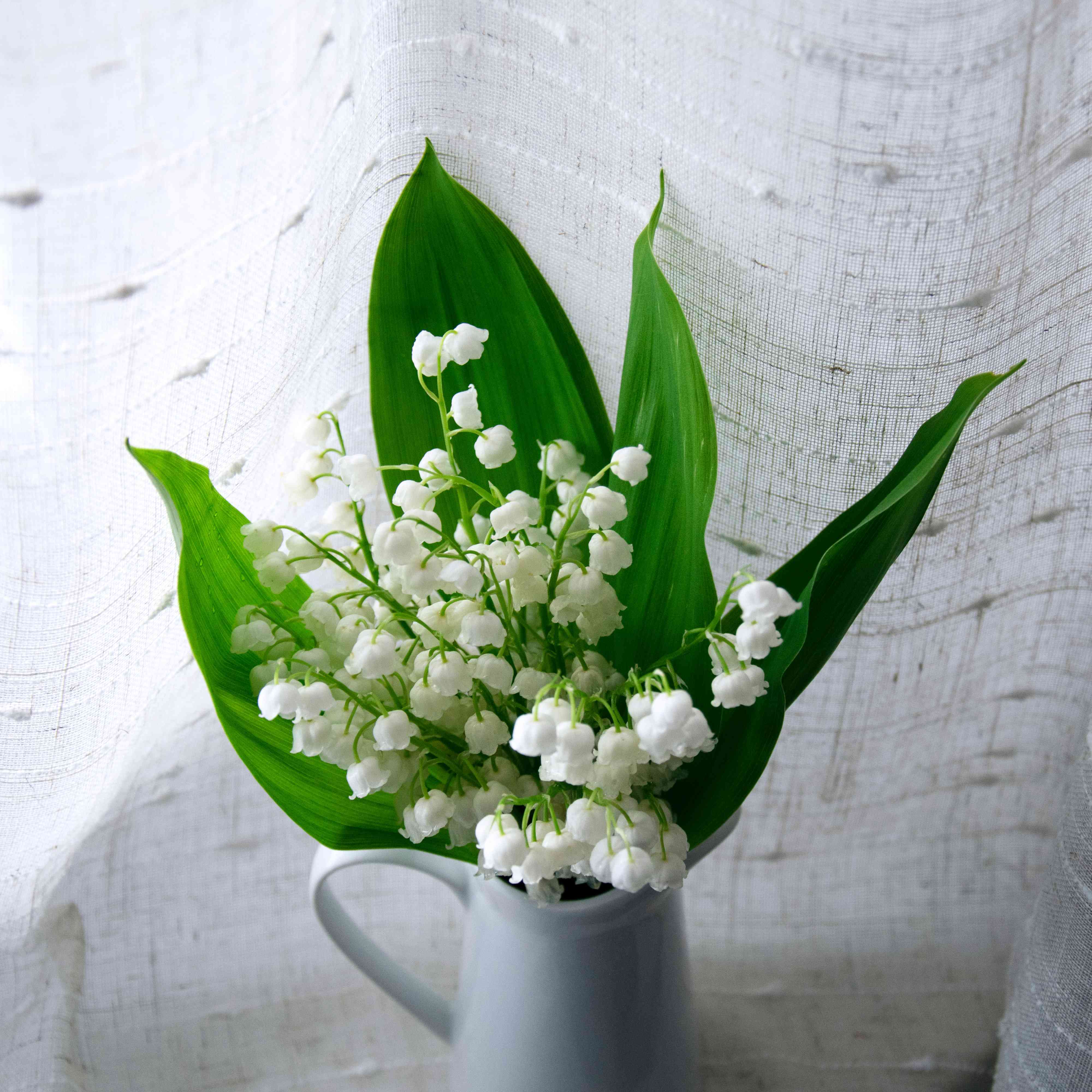 lily of the valley birth month flower
