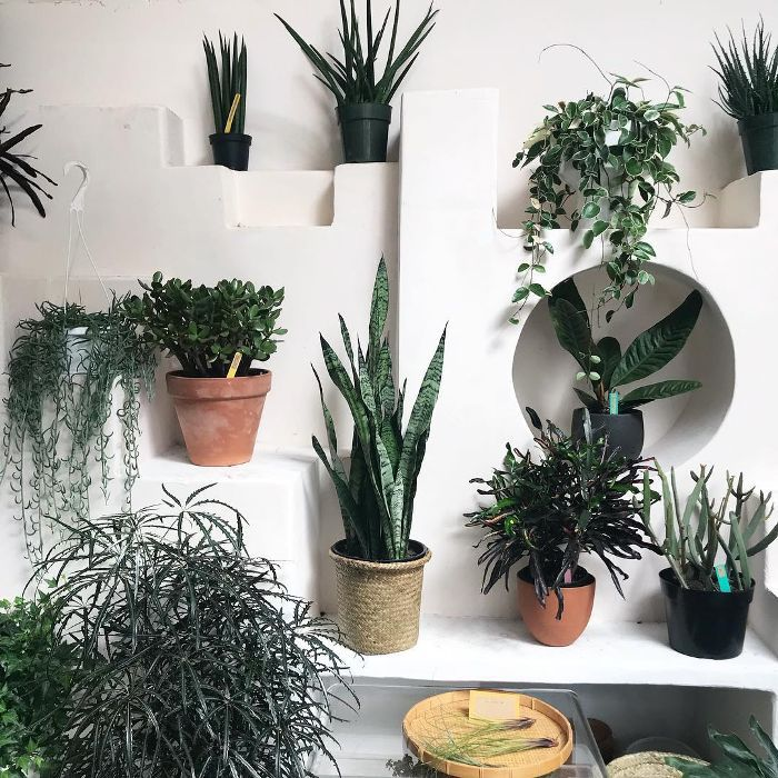 The Best Indoor Plants According To Pros