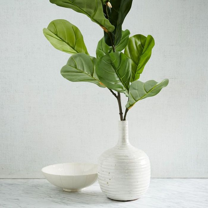 Fiddle Leaf Fig Branch