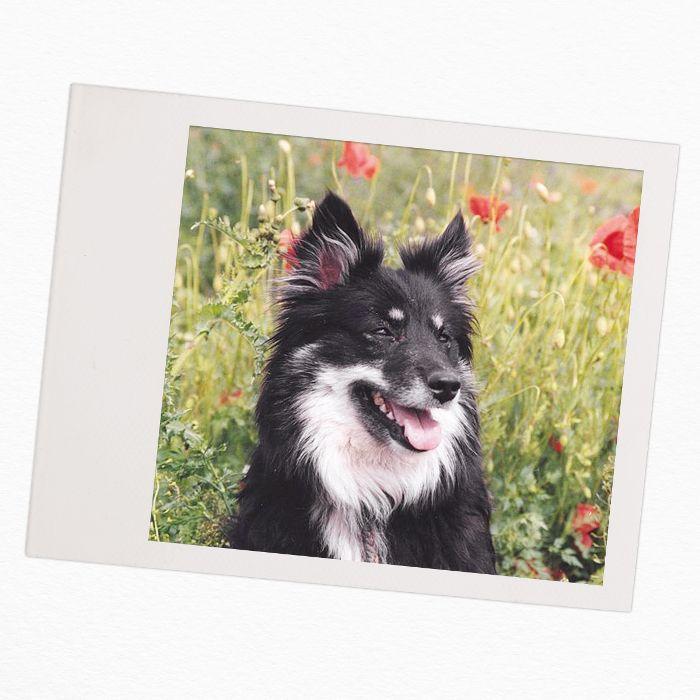 razas de perros para familias con niños