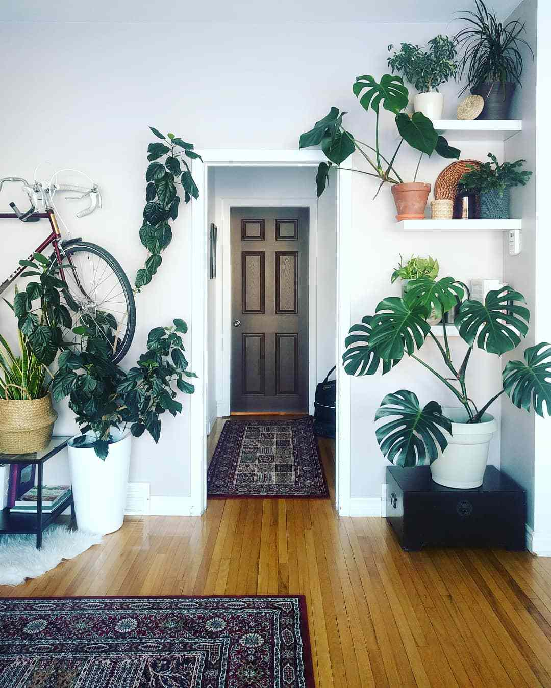 framing planters