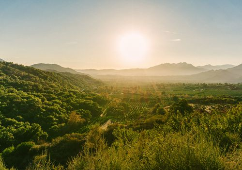 Views of the Ojai Valley and Citrus Trees from Ojai, California