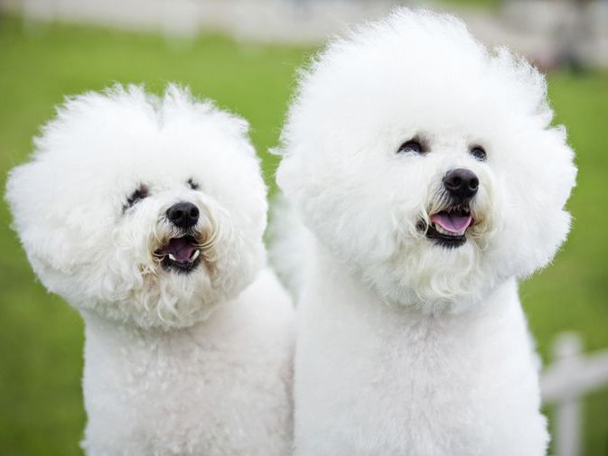 Meet 30 Of The Cutest Dog Breeds In The World