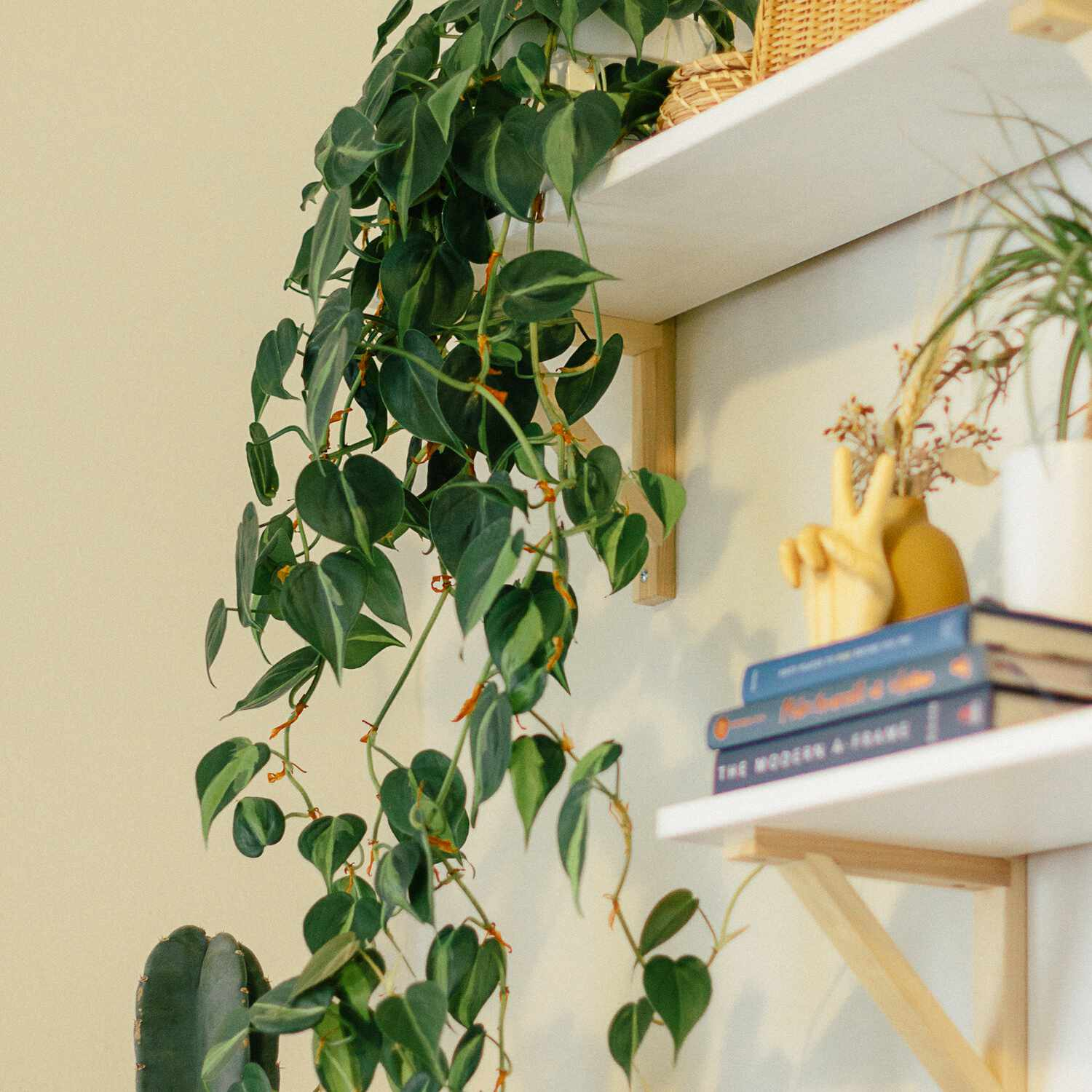Trailing heartleaf philodendron on a high shelf