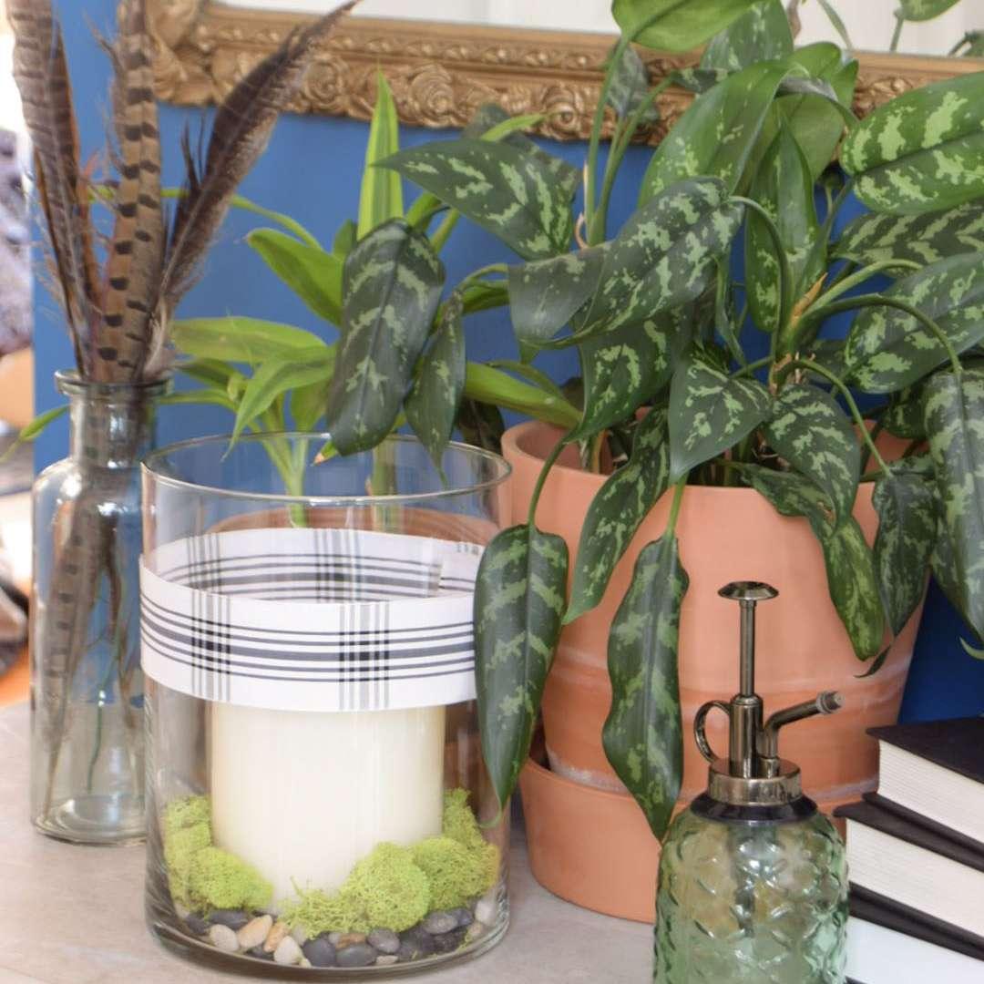 best window plants: prayer plant