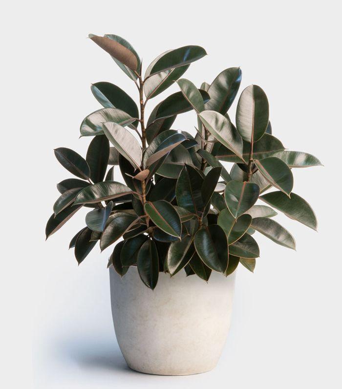 Best Low Light Plants For Bedroom: 7 Indoor Plants For Low-Light That Crave Darkness