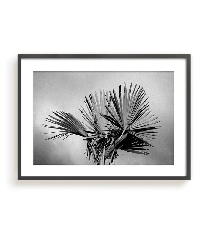 Isaac Zoller Palm Photography