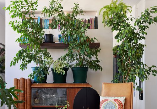 plants with chair