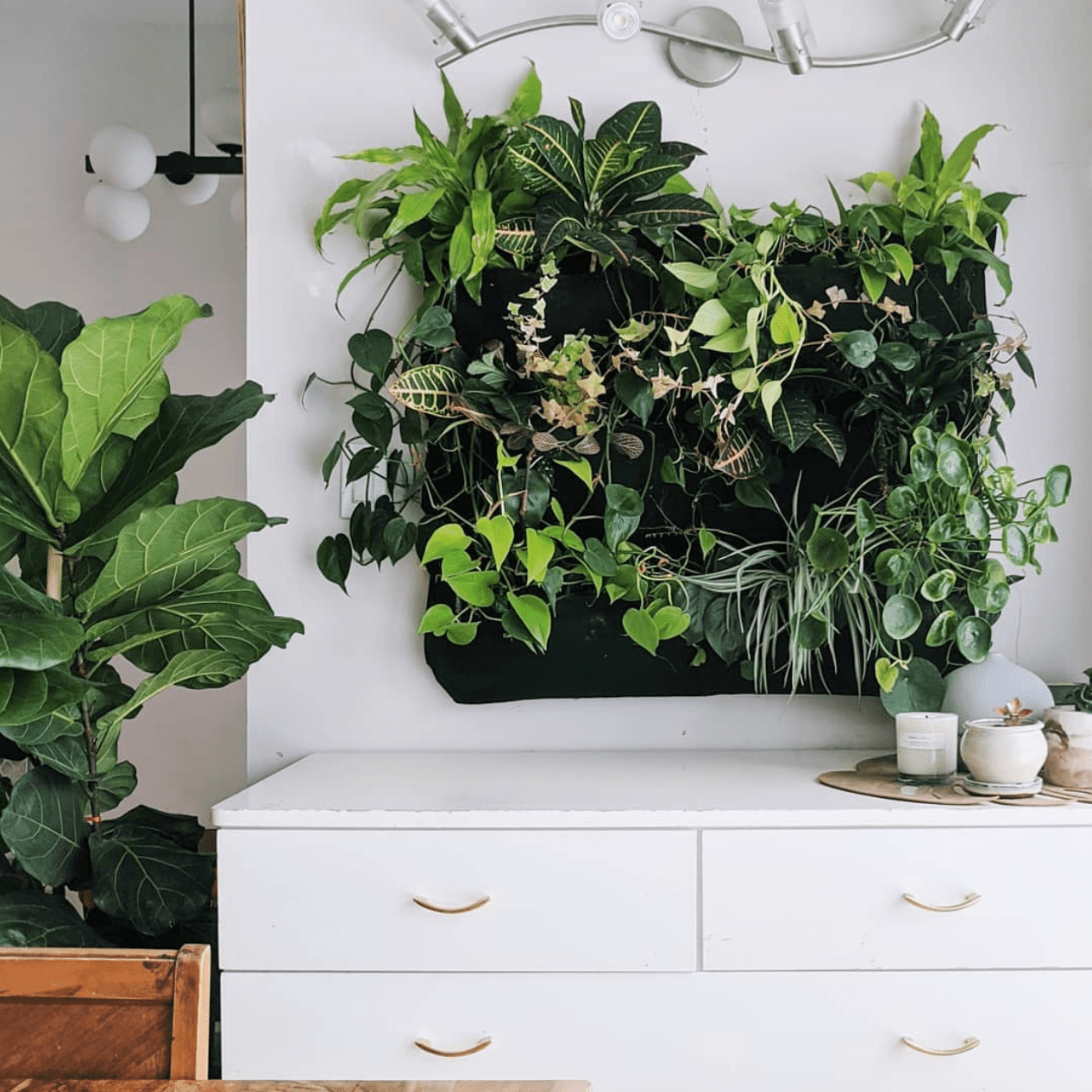 PLANT ROOST