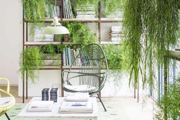 Indoor hanging plants around bookshelves in a living room