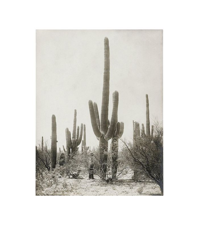 Capricorn Press Vintage Cactus Photo - 1900s Tuscon, Vintage Desert Print
