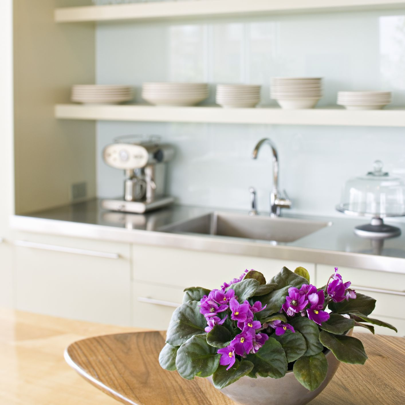 purple african violets on wood counter in white kitchen
