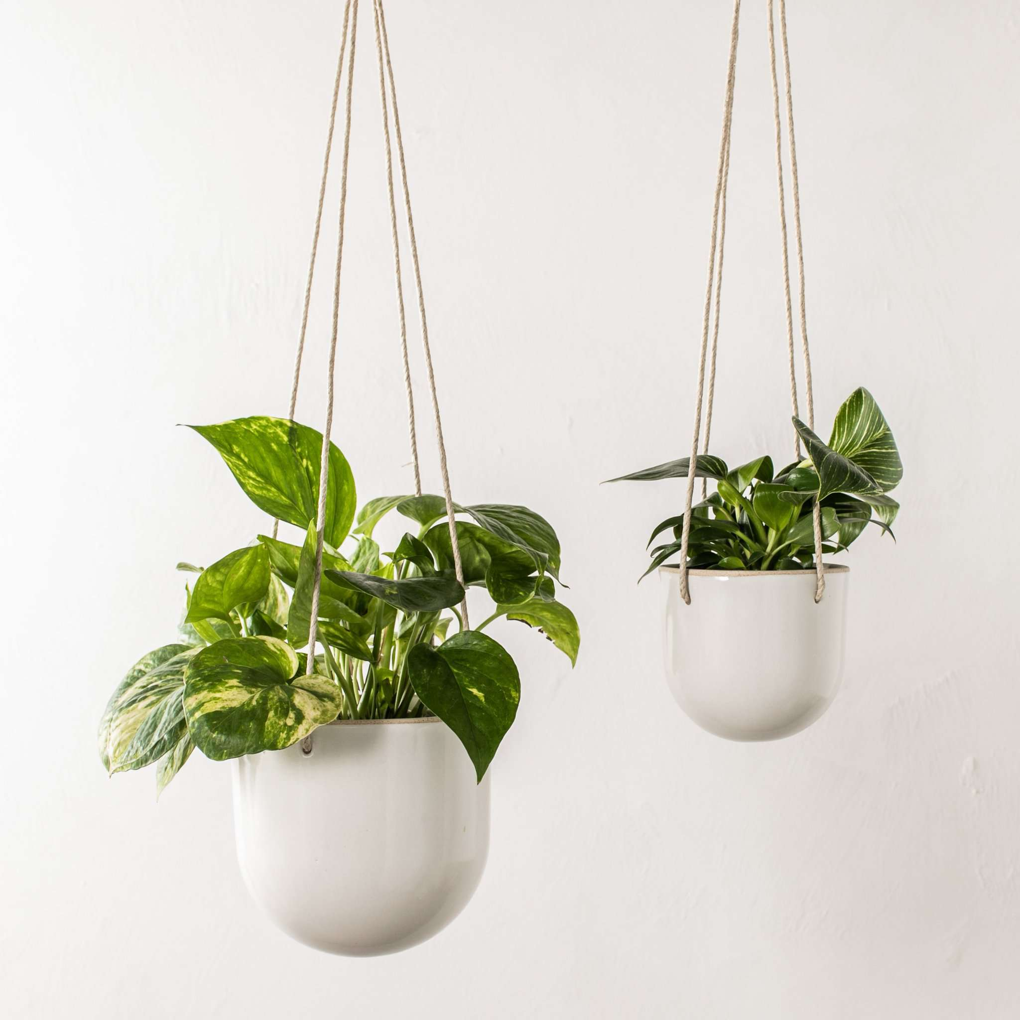 White Arched Hanging Planter