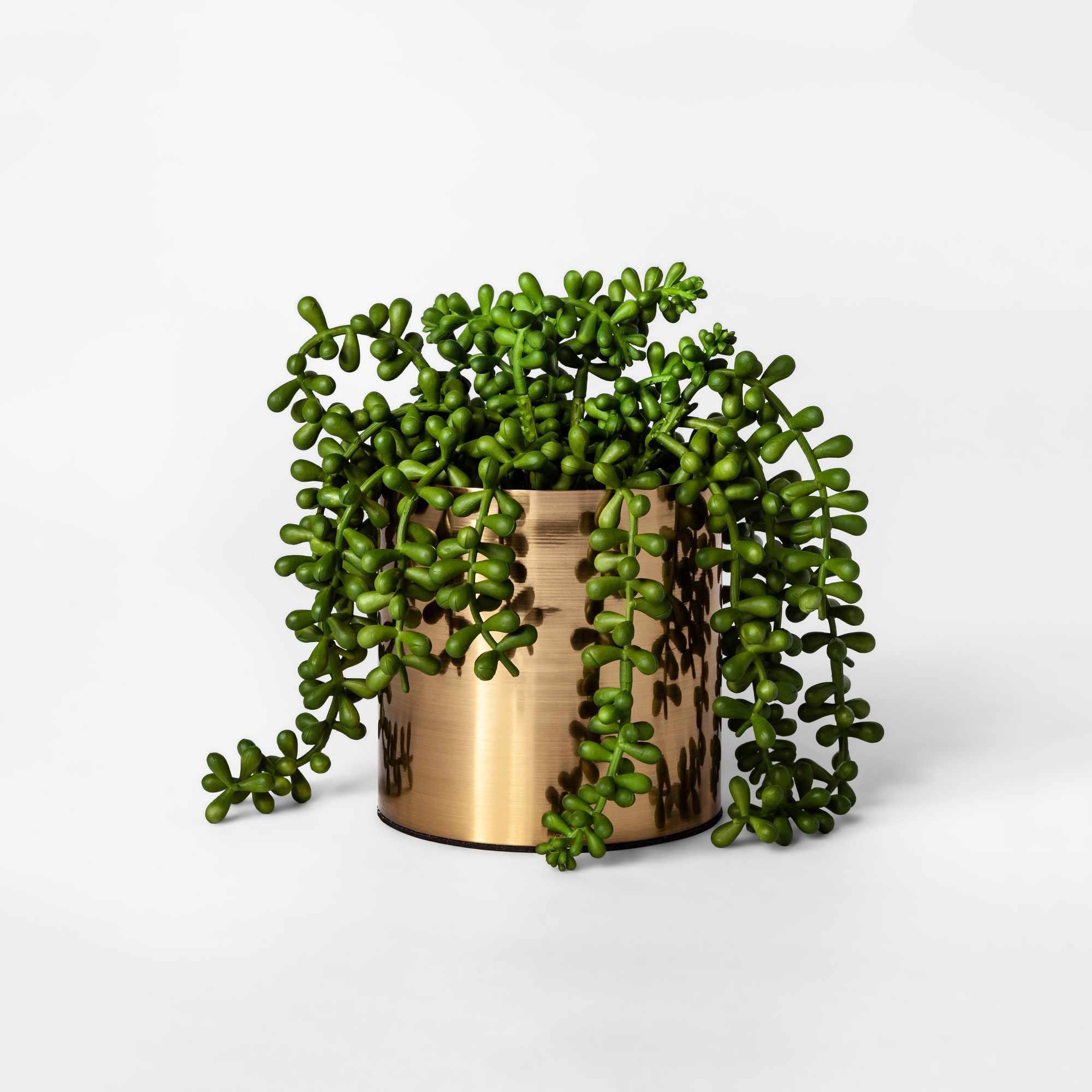 Succulent—Cubicle Decor