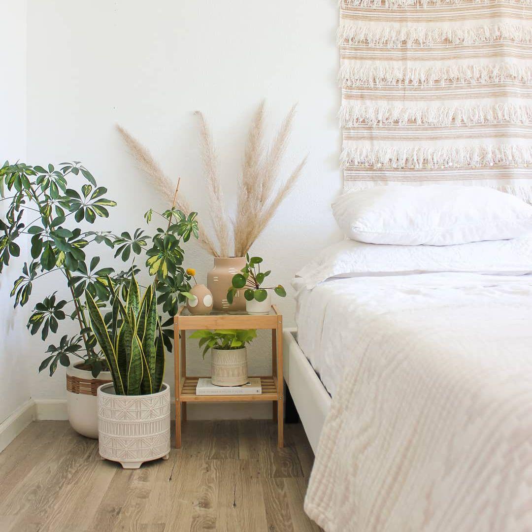 Schefflera plant in corner