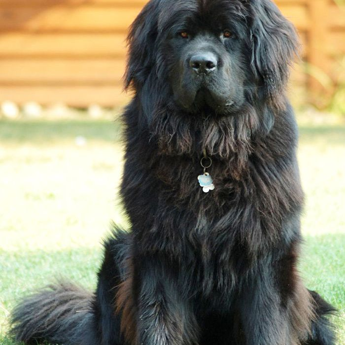The 10 Gest Dog Breeds In World