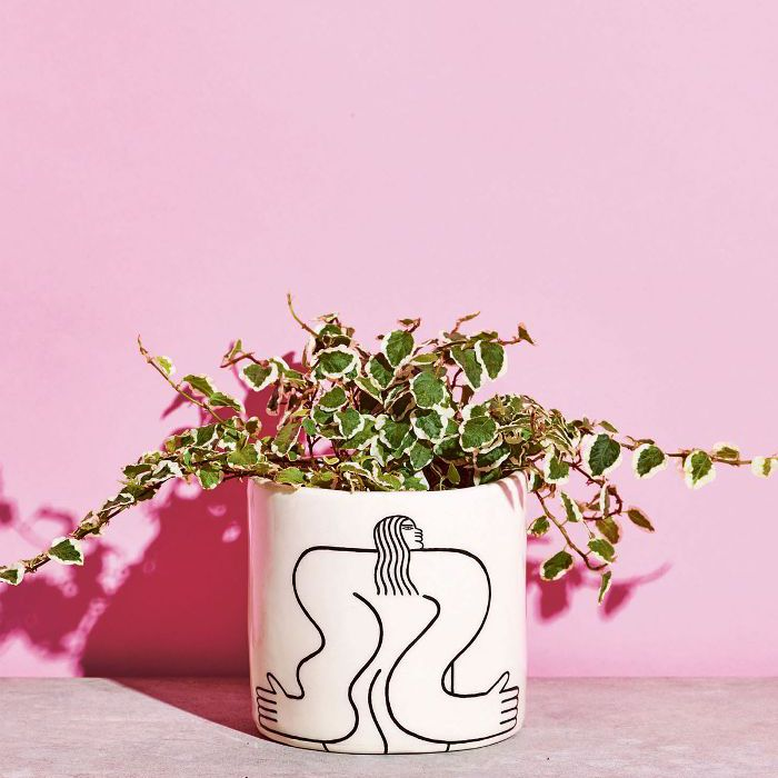 Low-Light Indoor Plants — Creeping Fig