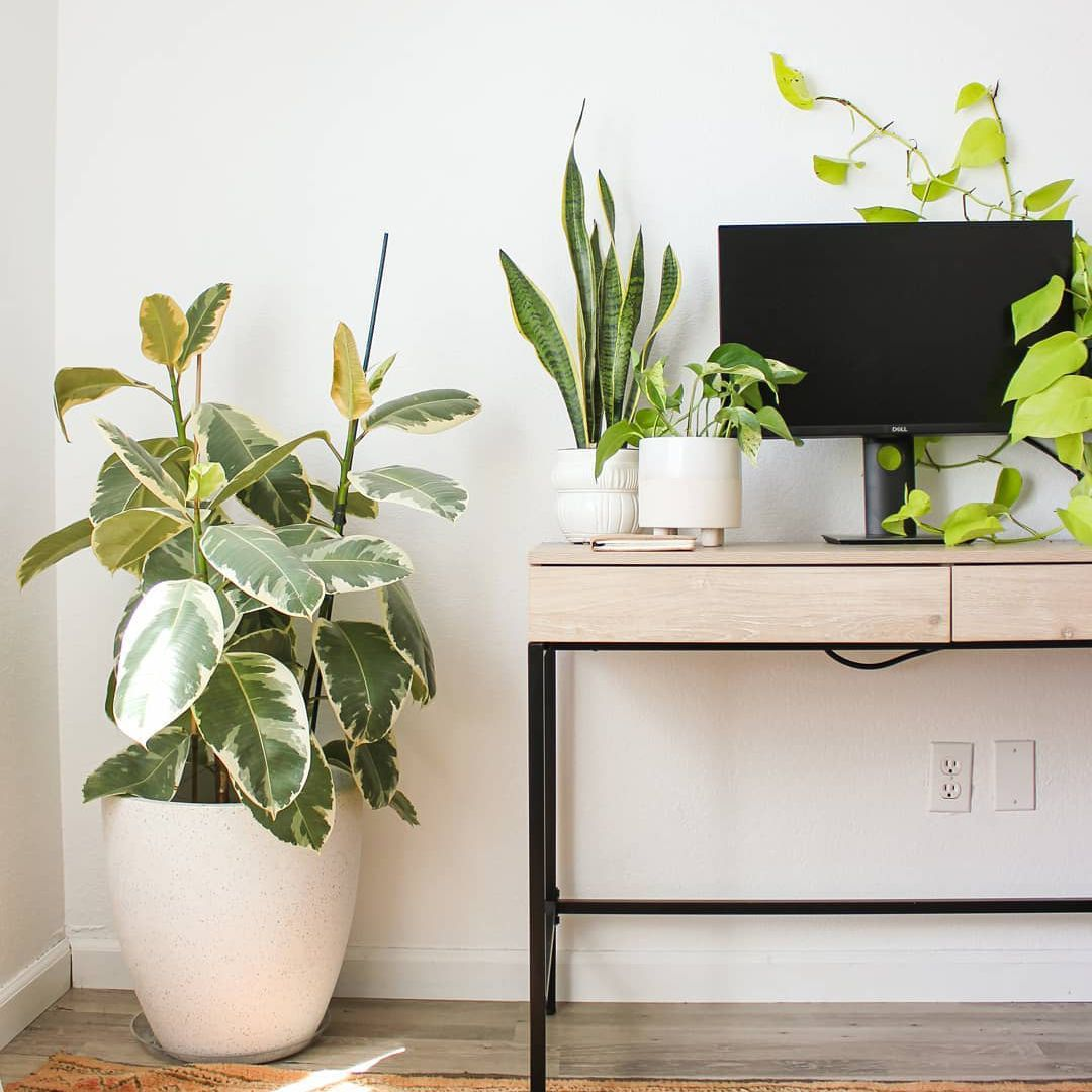 Desk with lots of greenery