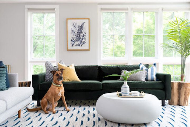 Fun living room with velvet sofa and dog.