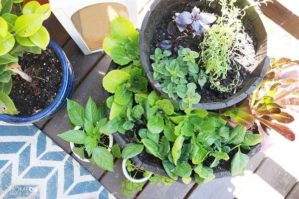 Patio herb garden from overhead.
