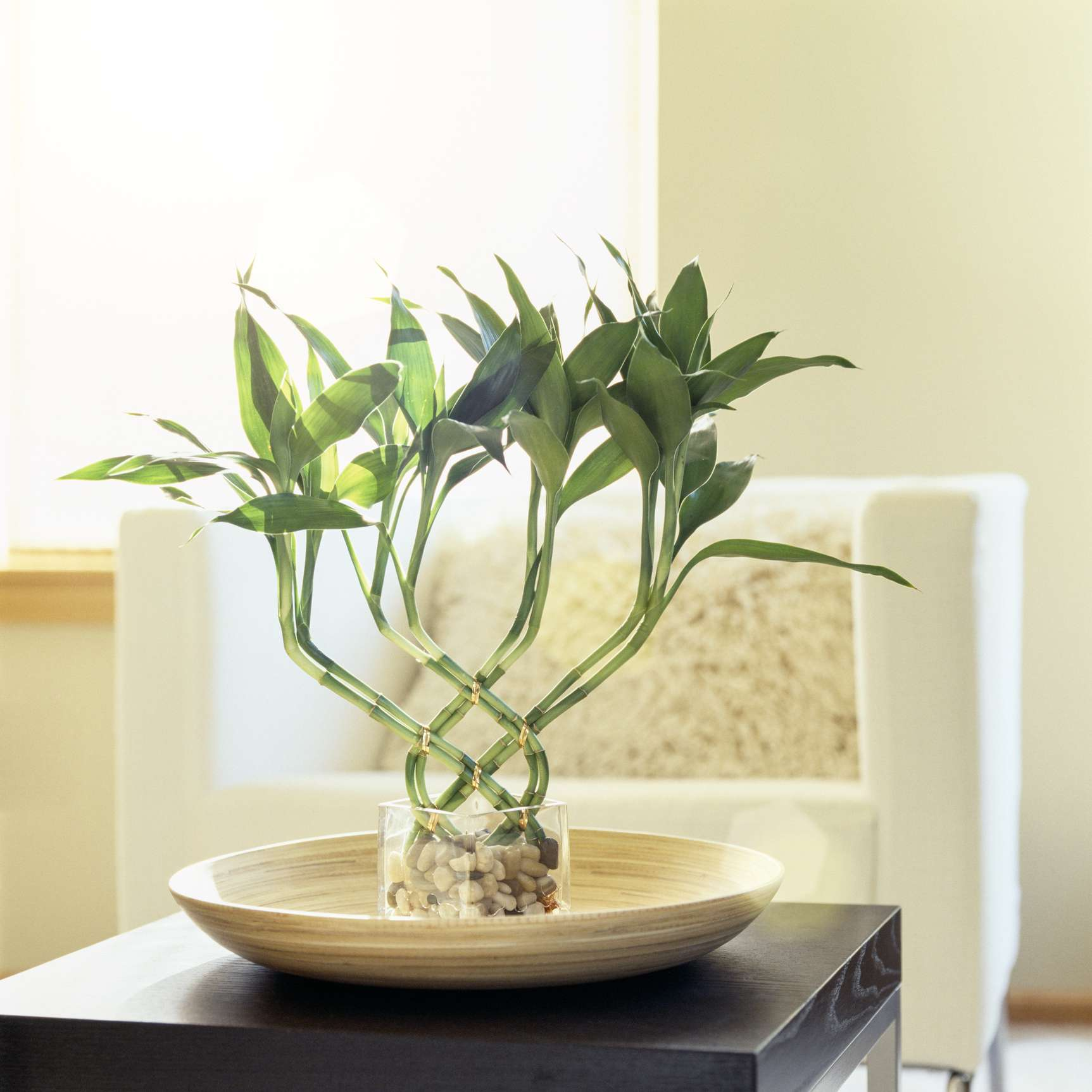 lucky bamboo woven together in a bowl on top of a black table with window in background