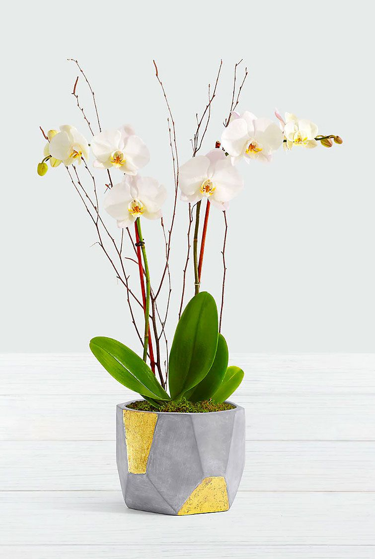 ftd orchid in grey and gold geo pot