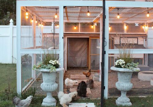 Chicken coop with string lights