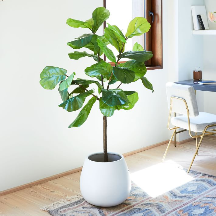 An artificial fiddle leaf fig tree in a white pot.
