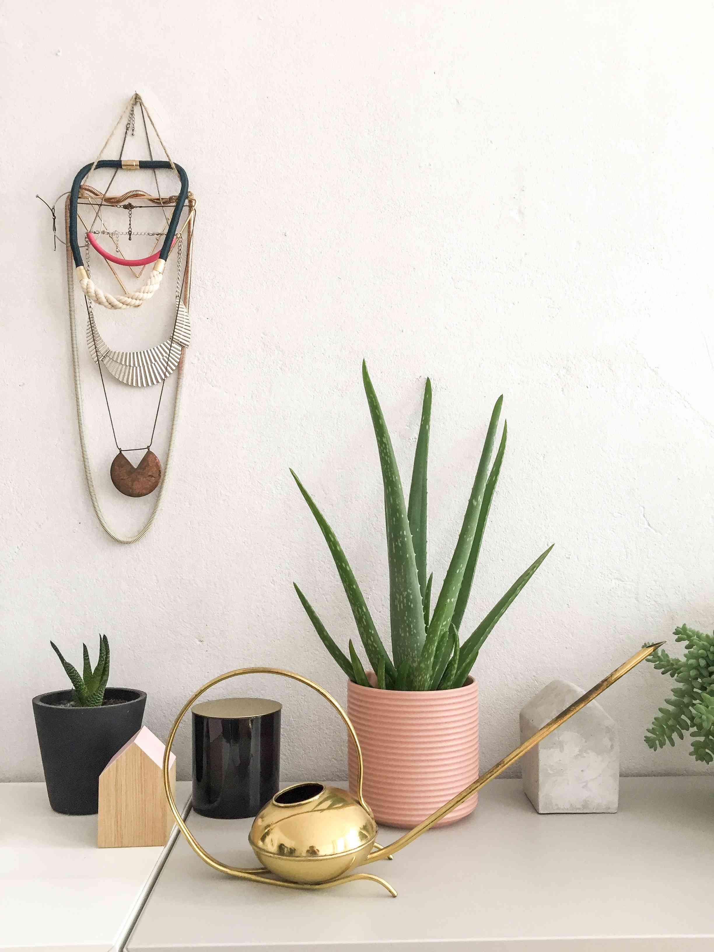 Aloe Vera and other plants in colorful pots