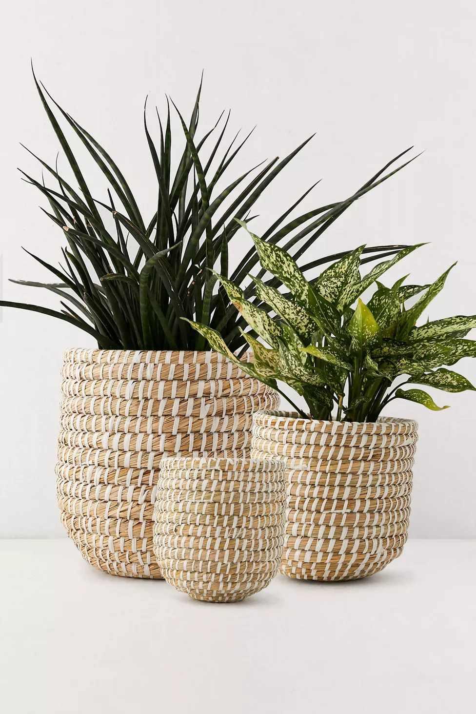 basket planter