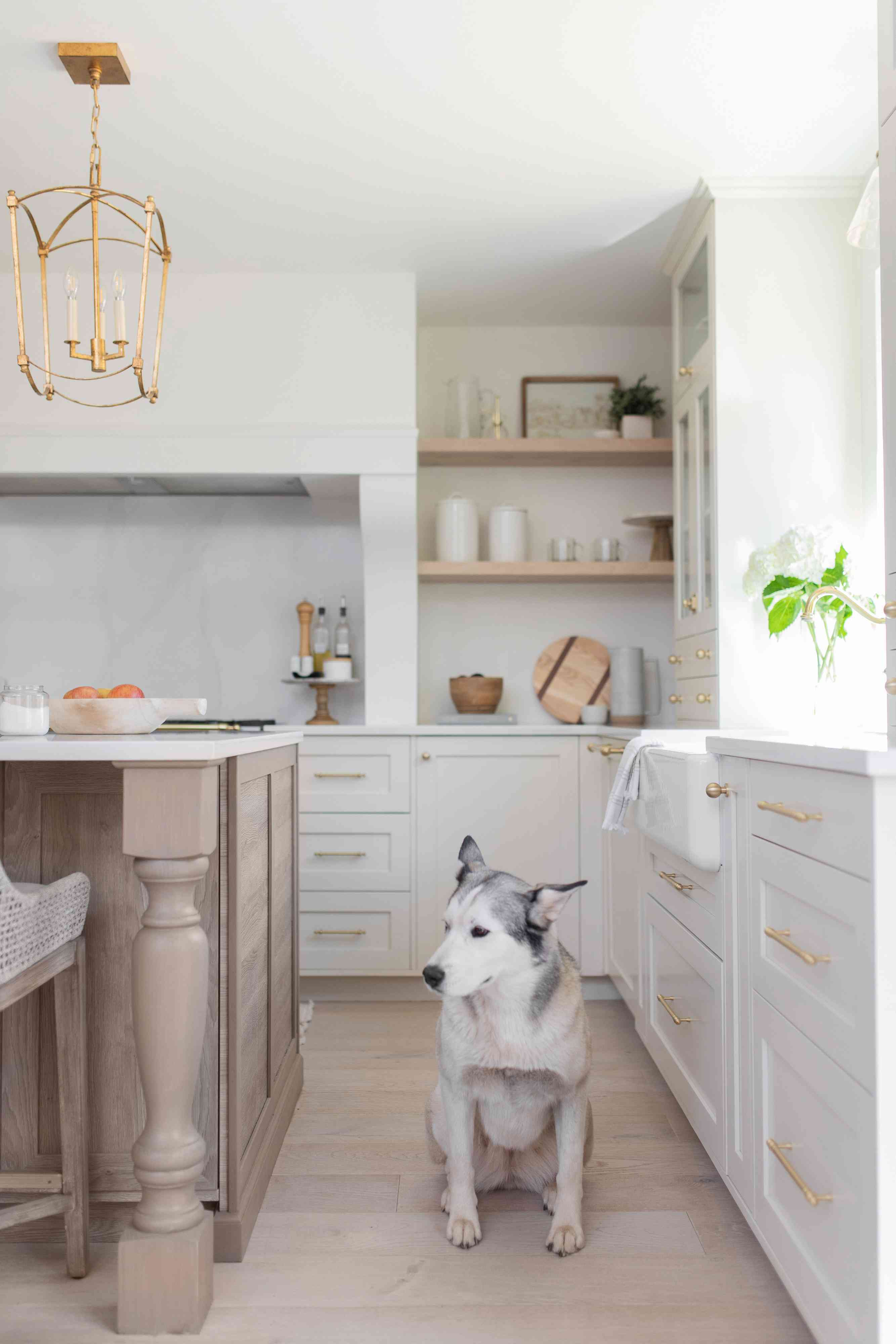 Husky dog in the kitchen.