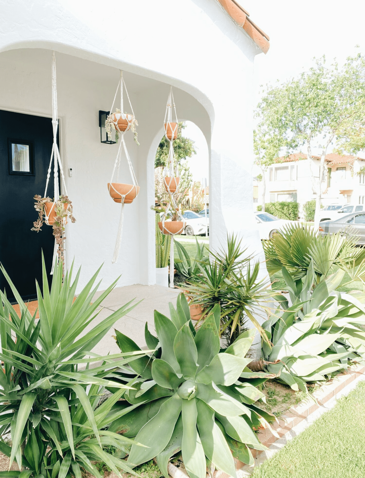 Desert inspired exterior with large leafy plants.