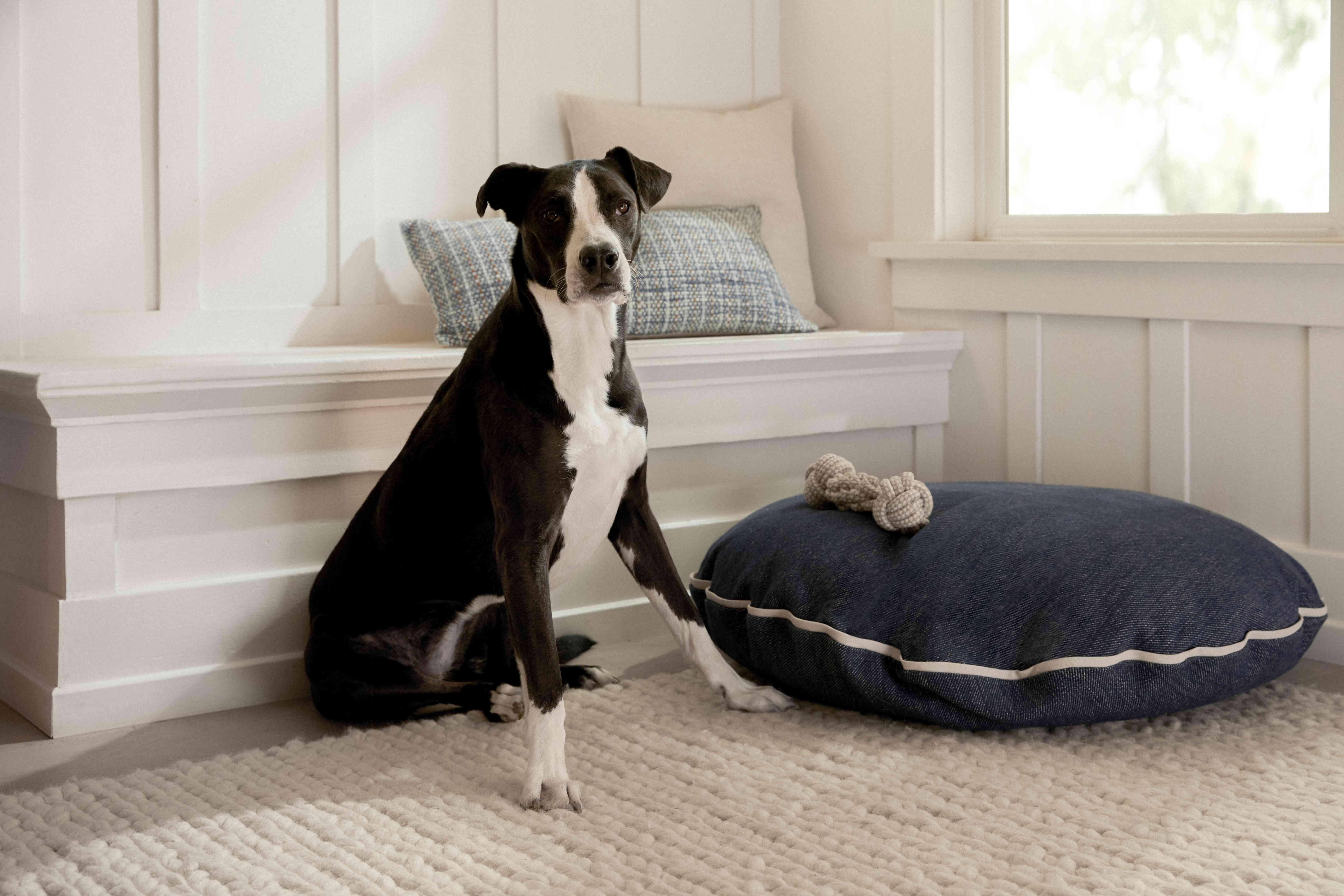 Madewell x Parachute denim dog bed