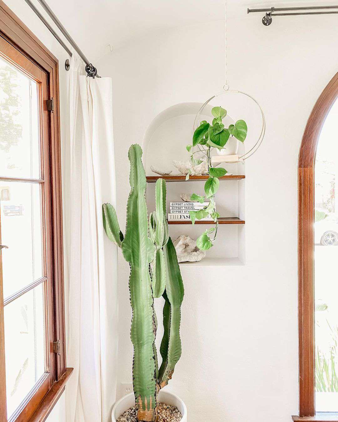 Cactus in a corner