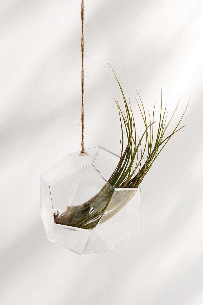 Dodecahedron Hanging Terrarium
