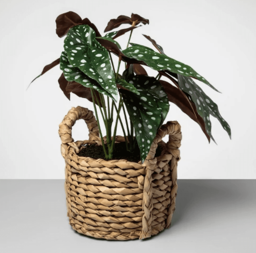 Target Artificial Dotted Begonia Plant