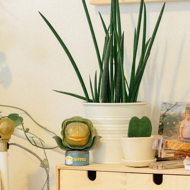 Cylindrical snake plant on a styled drawer unit