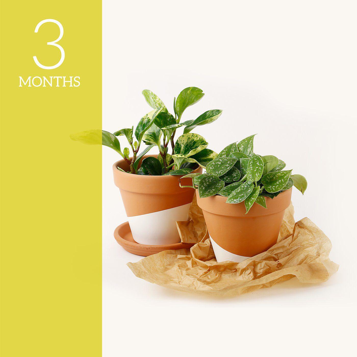 3-Month Plant Subscription