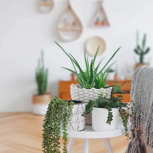 Aloe vera and assorted plants on a side table