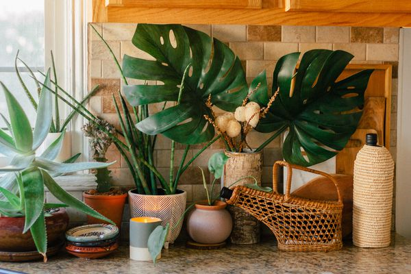 Assorted plants on a kitchen counter