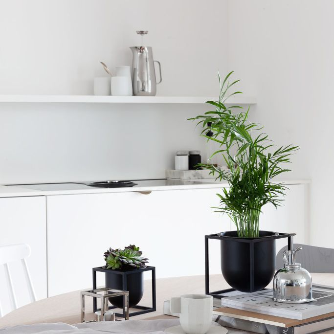 green kentia palm in black container on wooden kitchen table with books, towel, small succulent, white coffee mug