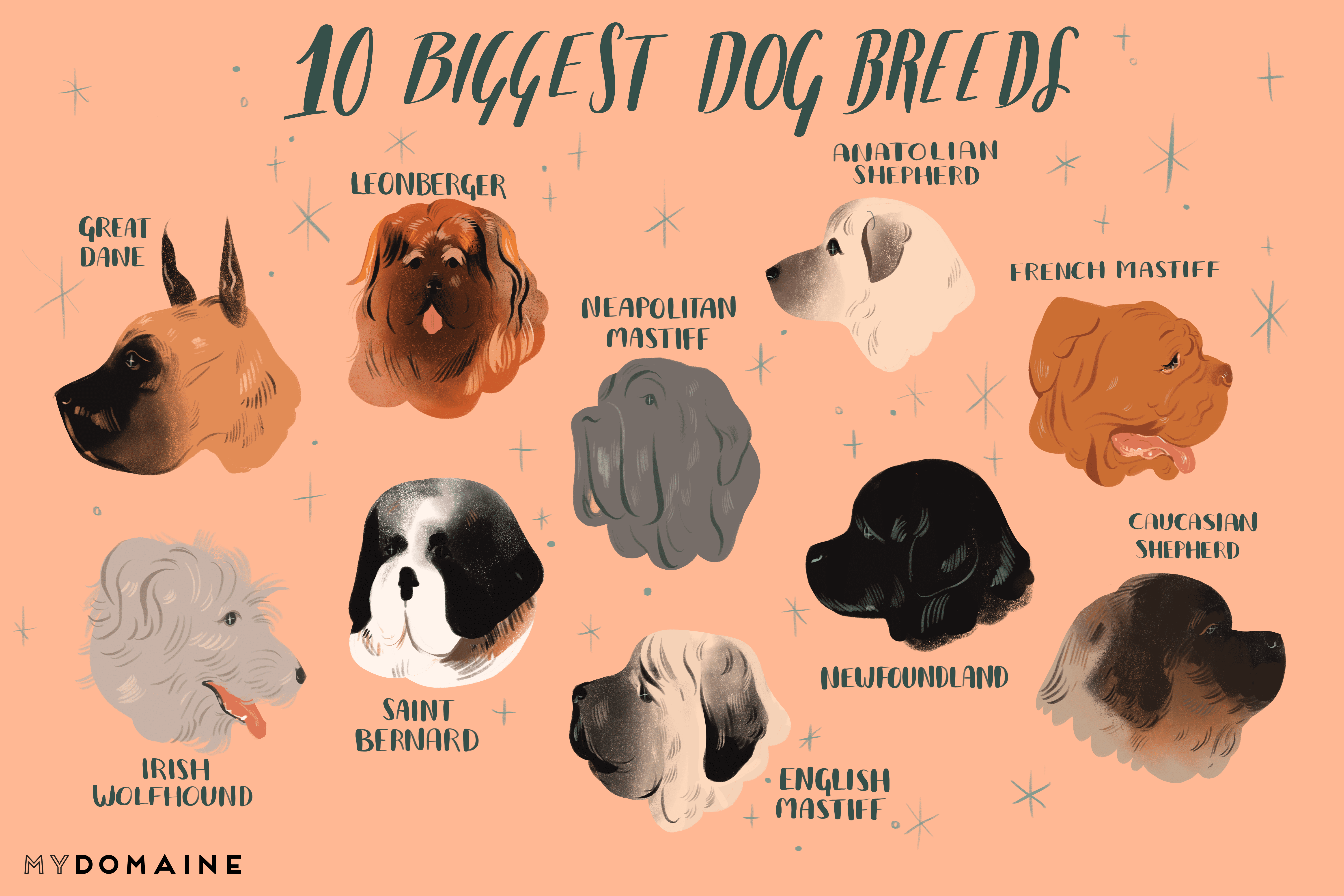 45+ Dog Breeds List With Pictures And Price