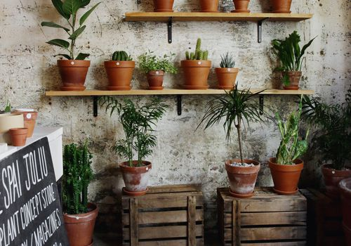We the People Style—How to Grow Aloe Vera