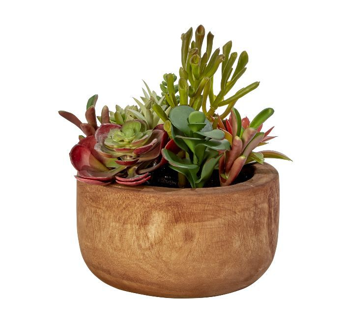 Threshold Succulent in Wood Base