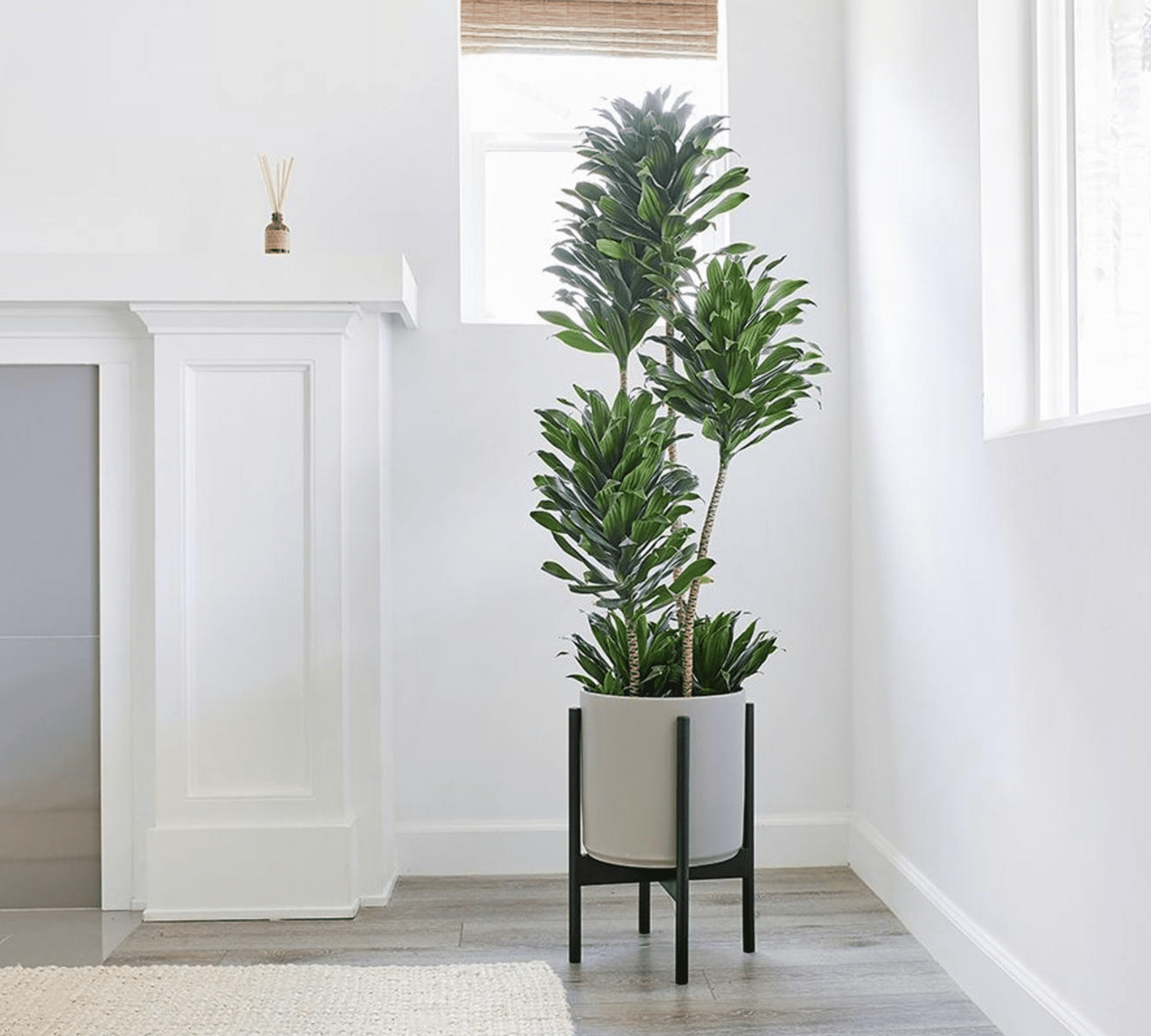 10 Best Houseplants for Your Living Room