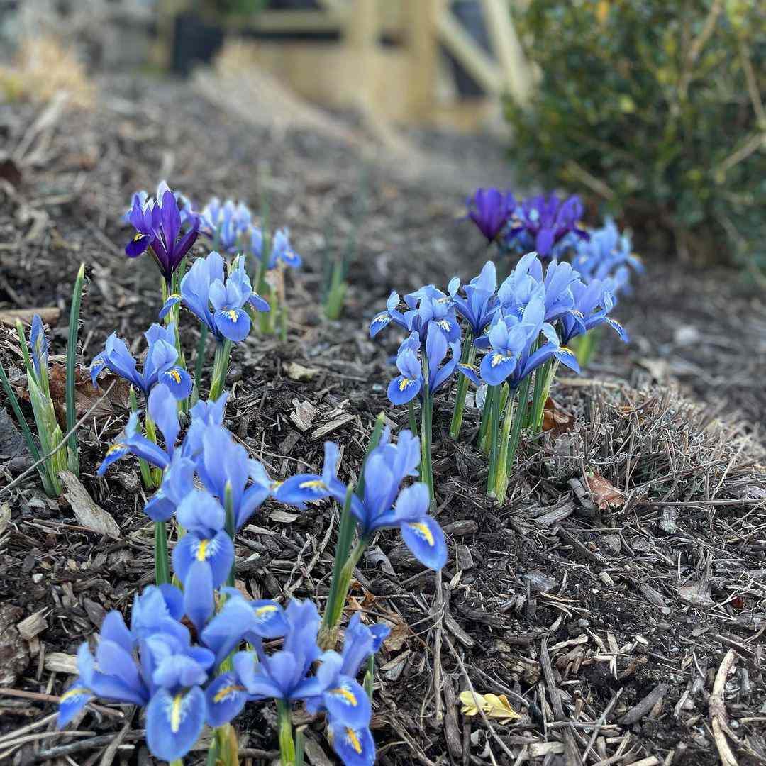 gladiolus birth month flower