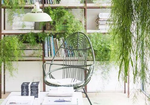 indoor hanging plants by bookshelf