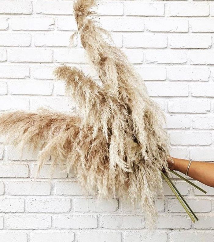 Pampas People Pampas Grass, 5 Pieces