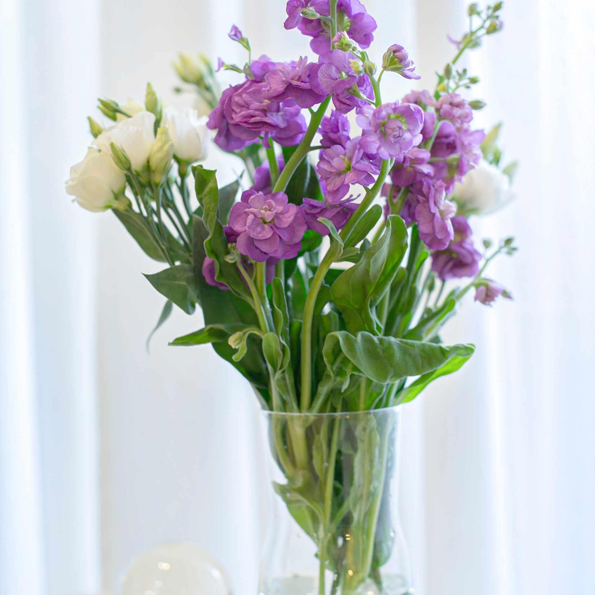 violet birth month flower