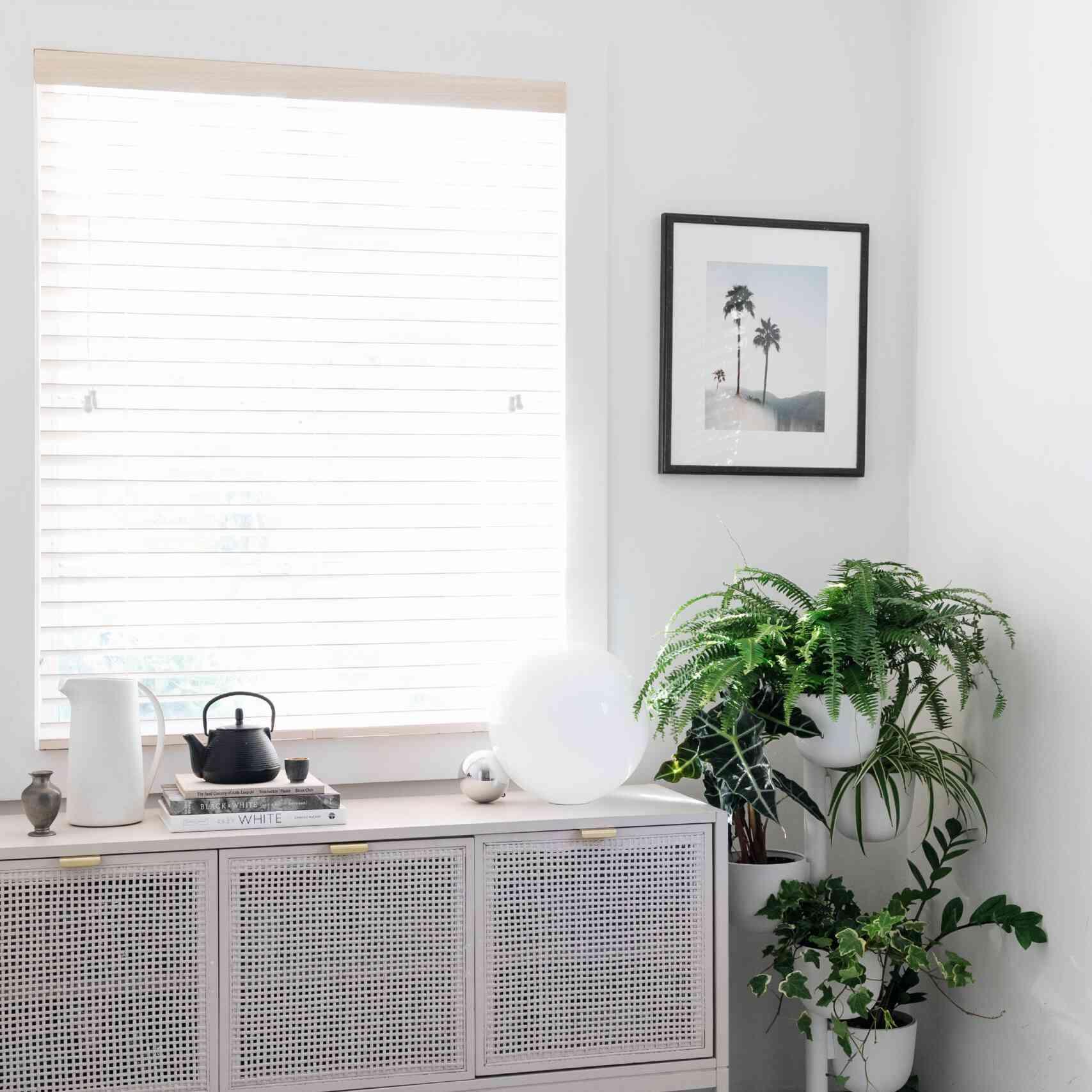 best houseplant for cats: Boston fern